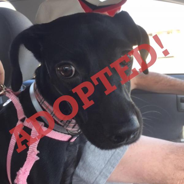Nori adopted dog dallas pets alive