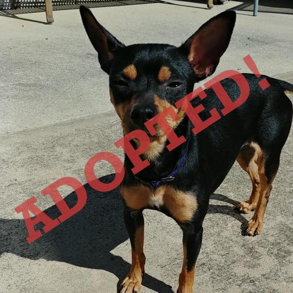 Valentina Adopted Dog Dallas Pets Alive