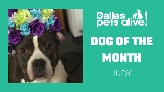 DPA Dog of the Month – January: Meet JUDY