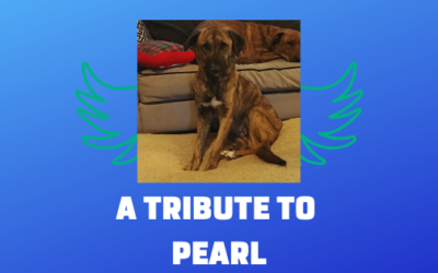 A Tribute to Pearl