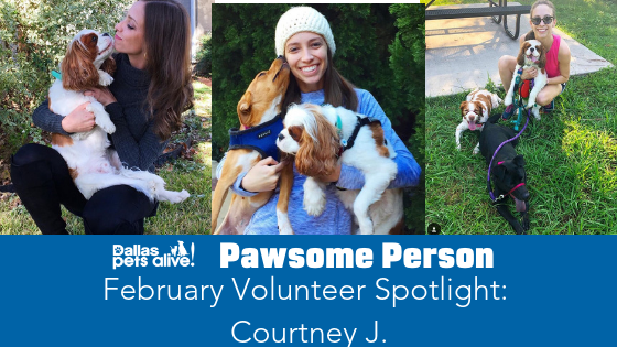 DPA's Pawsome People: February 2019 Volunteer Spotlight