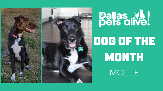 DPA Dog of the Month – March: Meet MOLLIE