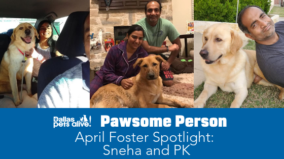 DPA's Pawsome People: April 2019 Foster Spotlight