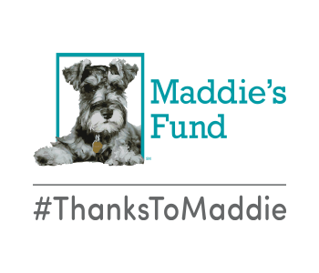 Dallas Pets Alive! is a proud recipient of funding from Maddie's Fund®, helping to achieve a no-kill nation #ThanksToMaddie.