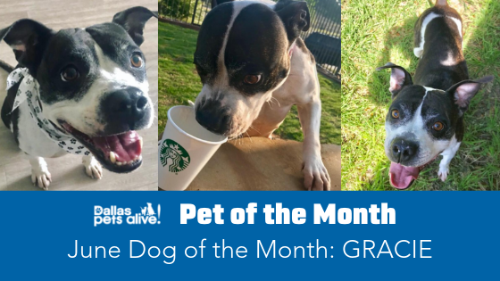 June 2019 Dog of the Month: Meet Gracie!