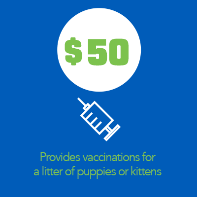 a $50 donation to Dallas Pets Alive provides vaccinations fo ra litter of puppies or kittens