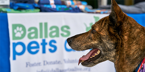 FUNDRAISE FOR DALLAS PETS ALIVE