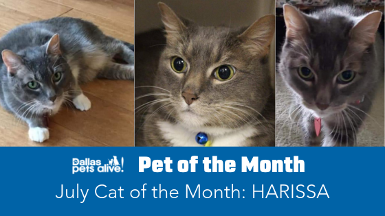 July 2019 Cat of the Month: Meet HARISSA!