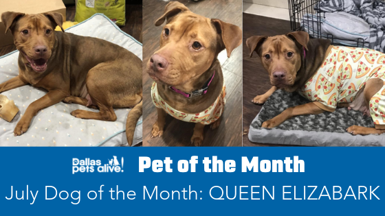 July 2019 Dog of the Month: Queen Elizabark!