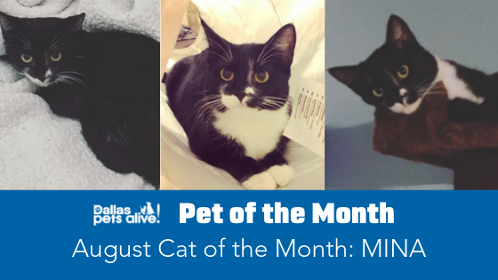 August 2019 Cat of the Month: Meet MINA!