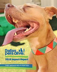 DPA Impact Report 2019