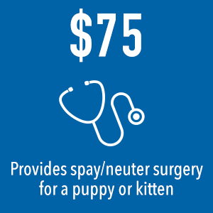 Your $75 donation to Dallas Pets Alive covers spay/neuter surgery for one animal