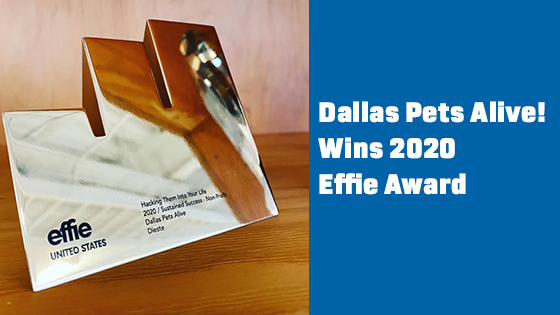 Dallas Pets Alive! Wins Effie Award for Marketing