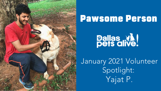 DPA's Pawsome People: January 2021 Volunteer Spotlight