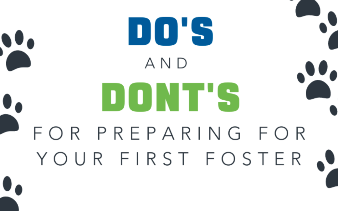 10 Do's and Don'ts When Preparing For Your First Foster Pet