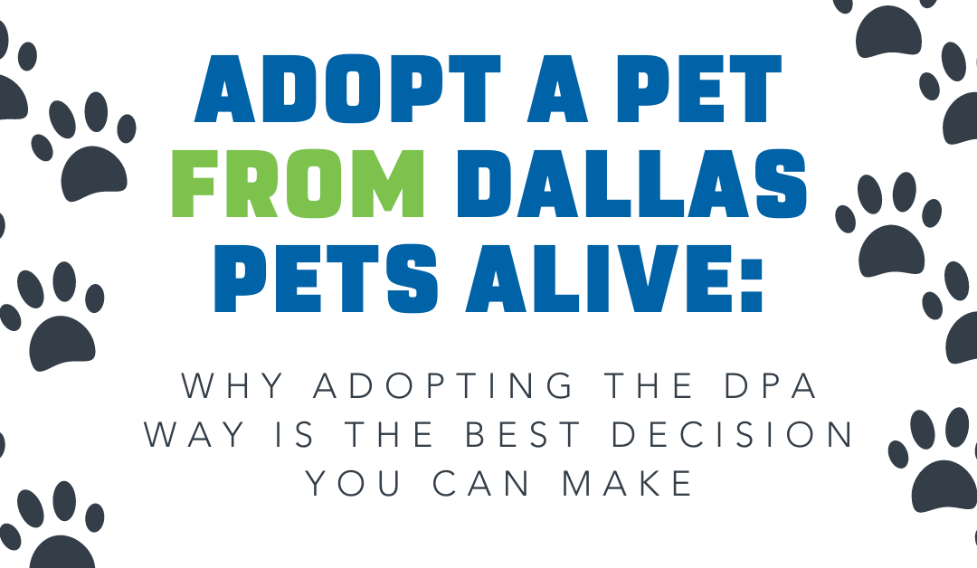 Adopt a Pet from Dallas Pets Alive: Why Adopting the DPA Way is the Best Decision You Can Make