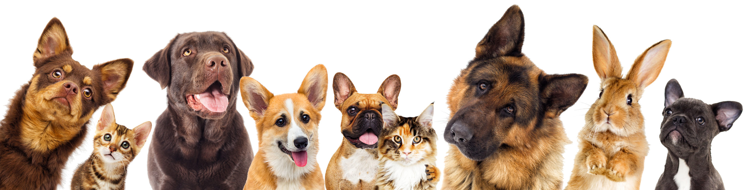 Bottom row of pets